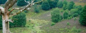 Veluwezoom Trail